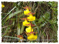 Orchids Inca trail to Machu Picchu Peru